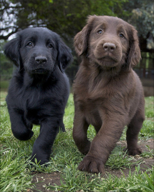 ihavelotsofdogs:  2 of the girls by Xanboozled on Flickr.  Oh my GOD