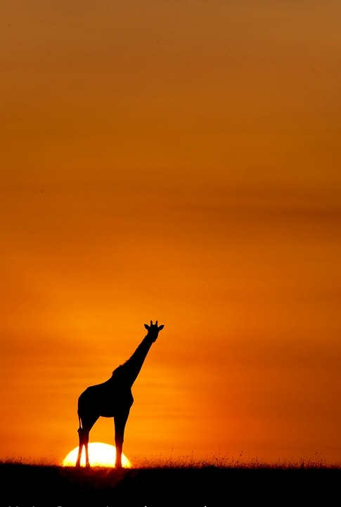 "earth-song:  ""Good Morning World"" by Marius Coetzee"