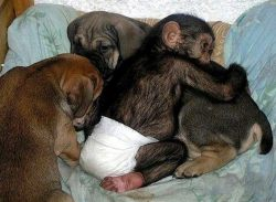 cutestuffdotco:  Monkey hugs a Puppy!!!!