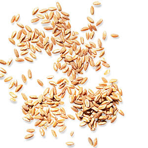 3 Healthy Tips on Farro from Seamus Mullen A cup of farro has about 8 grams of cholesterol-lowering fiber. That's four times as much as white rich; brown rice weighs in at around 5 grams. Find more tips and recipes here Connect with RachaelRayMag on Facebook and Pinterest.