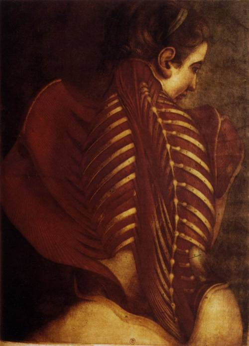 Jacques Fabien Gautier d'Agoty, Anatomy of a Woman's Spine