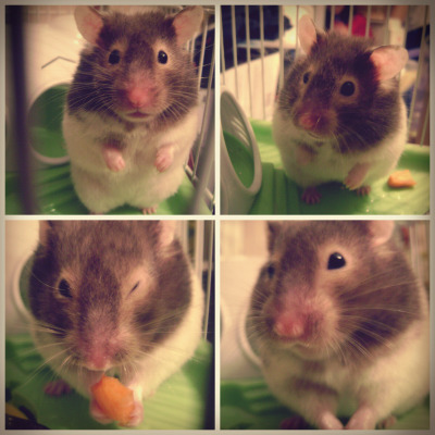 ayyoitschristii submitted:  My hammy, Soapy (: