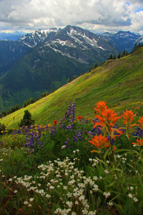 inoperant:  Rolling Mountain Meadow (by justb)