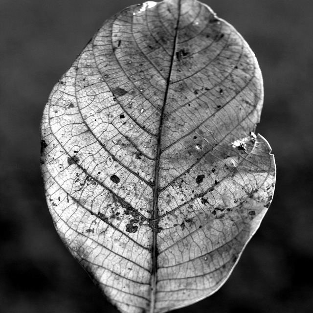 "Through the leaf on Flickr.""May it be a light to you in dark places, when all other lights go out.""  J.R.R. Tolkien"