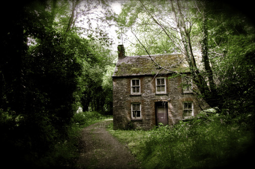 thefieldjournal:  Ivy cottage in Cardigan, Wales  I'd live in a cottage like this.