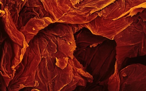 taktophoto:  Food photography through the microscope