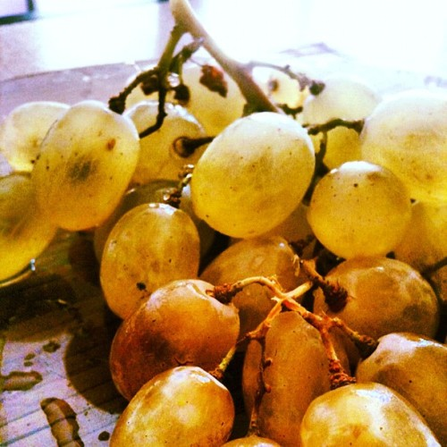 Omnomnom) #grape #grapes #live #berry #kitchen #instaphoto #fruit #my  (Taken with Instagram)