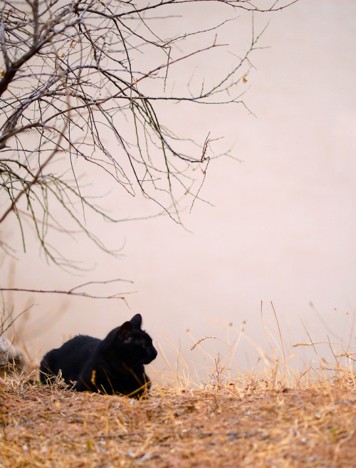 photogenicfelines:  (Peter Comninellis)