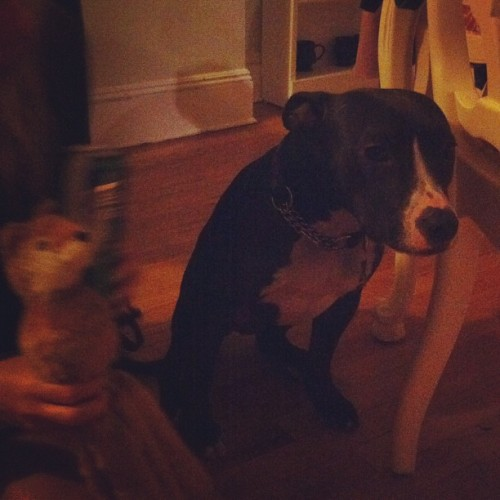 .@corynne's pup Ryer hangin out with BearSquid 🐻🐙 (Taken with Instagram)