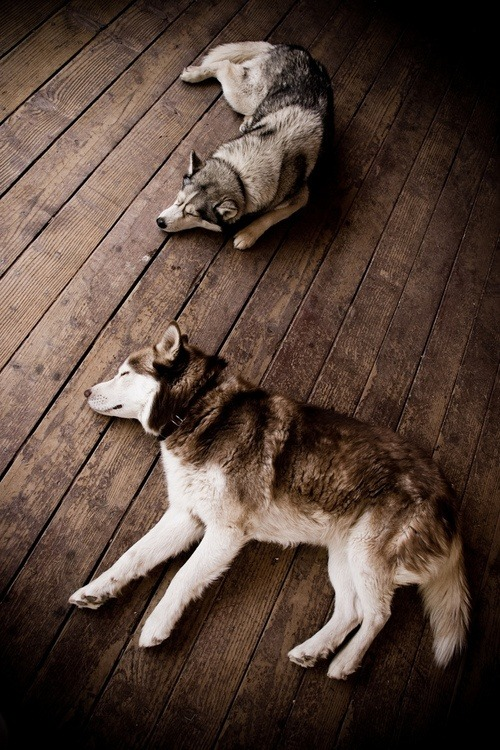 brutalgeneration:  Dog Day Afternoon (by jpdodd)