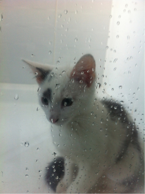 She loves sitting in the shower after people have been in it, wtf?