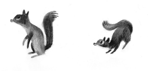 Squirrels by Isabelle Arsenault