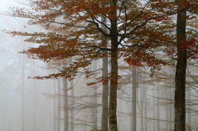 lost-in-the—woods:  Blurred Forest (by rudy.miculescu)