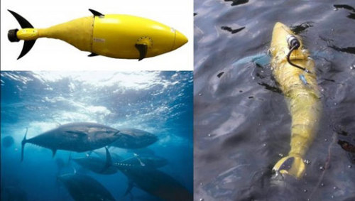 Robot tuna patrols for Homeland SecurityThe robo-fish would be able to squeeze into tight spaces such as the flooded bilges and tanks of ship interiors.