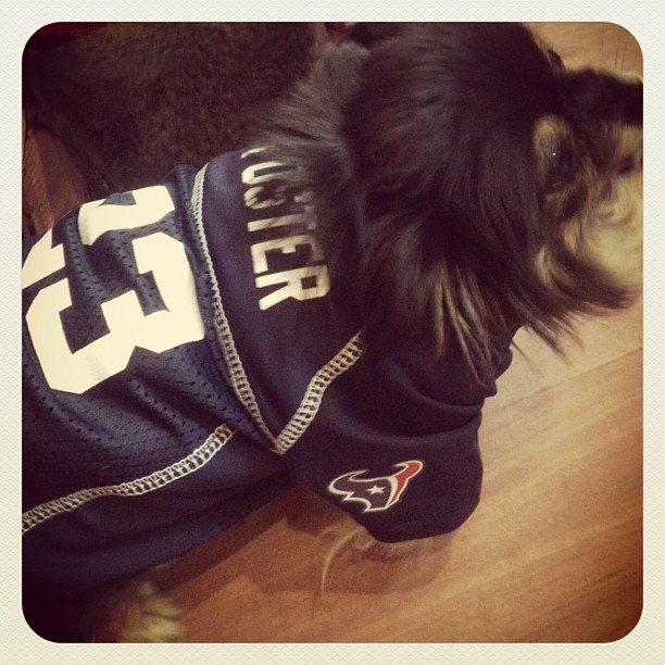 Football Fanatic! #ArianFoster #Texans #DoggyGenius (Taken with Instagram)