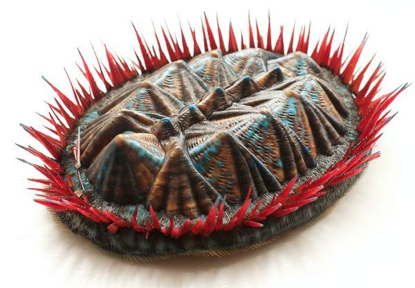 Prehistoric and Frightening Mollusk Recreated With 3-D Printer Fear not, the little guy was only about an inch long. Thus spiky ball of molluscian doom was reconstructed using CT-like scans of a 390 million-year-old fossil, and then constructed on a 3-D printer. How did they pick the colors? By comparing them to their modern-day relatives. I think it would make a great desk decoration, paleontologist or not. (via National Geographic)