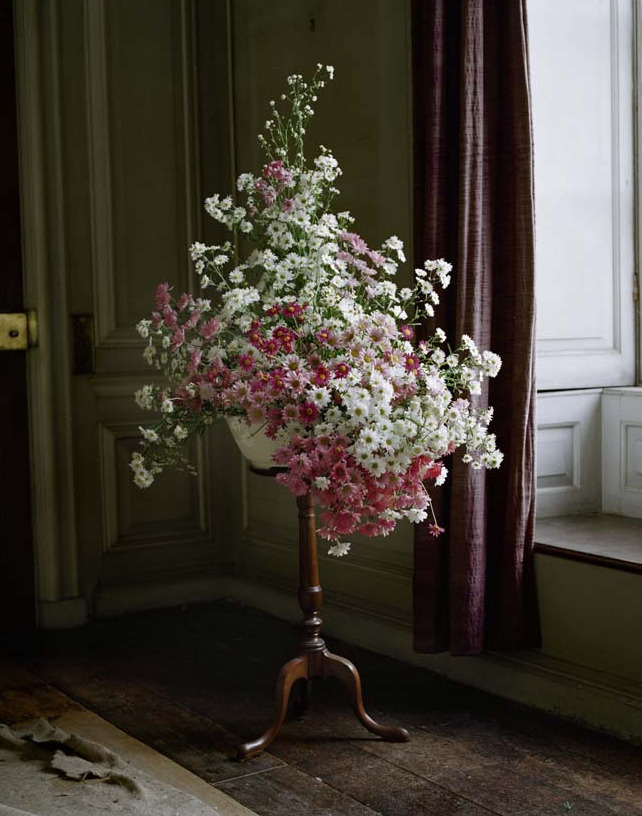 bienenkiste:  Ph. Tim Walker