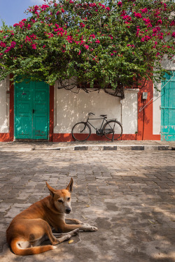 Bougainvillea, Pondicherry on Flickr.
