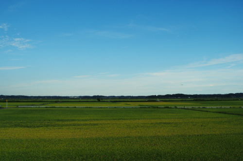 The rice fields of Narita, Japan