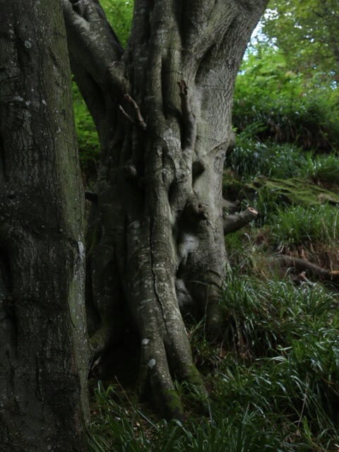 Tree Face, Ford, Northumberland on Flickr.