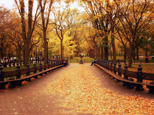 "Autumn leaves. Central Park, New York City.  Autumn is the start of something new. It's the promise of briskness followed by warmth. It's an inviting whisper that lingers in the air and brushes past the skin with its transient presence.  We inhale the earth's transition deeply into our lungs and exhale hopeful utterances on the condensation of our warm exhaled breaths.  —-  I love Central Park on overcast autumn days. When the elm trees are at their peak and have shed their leaves creating beautiful trails of foliage and the air is crisp, there is nothing better.  —-  View this photo larger and on black on my Google Plus page  —-  Buy ""Autumn Leaves - Central Park - New York City"" Prints here, email me, or ask for help."