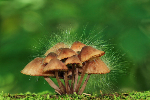 dontforgetaboutyourdreams:  Fungi with Fungus by *Corrie* on Flickr.