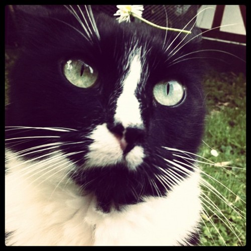 What's up? #cat #instashouts_tk #flower #eye #stupid #instagram  (Wurde mit Instagram aufgenommen)