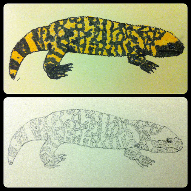 Gila monster on Flickr.Kinda screwed it up when I tried to colour it , oops . oh well.