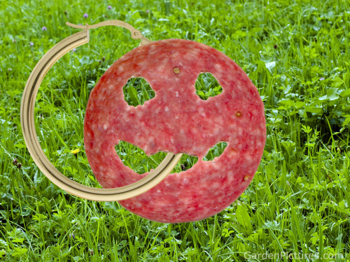 GOLD HOOP earring and smiling free-range Salami (pro-meat choice fashion accessory for Visual Competitors) Great Conversation Starter, 2012 •º• BUY IT ON ETSY NOW