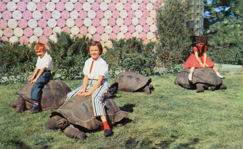 timetravelnow:  1960s, Black Hills Reptile Gardens Rapid City, South Dakota