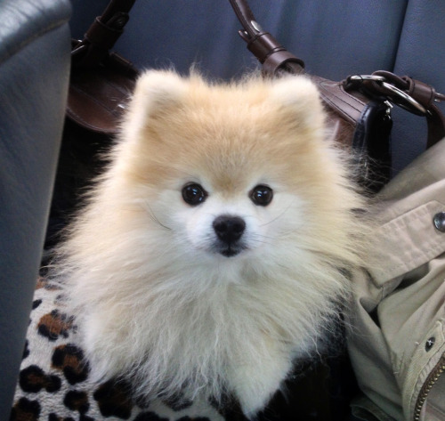 tommypom:  Road tripping..To Boston I go! Your patriotic pal, TommyPal