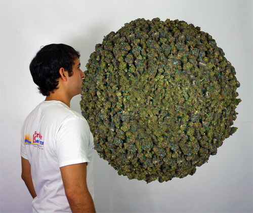 art404:  22 pound weed sculpture by Art404  looks shopped.