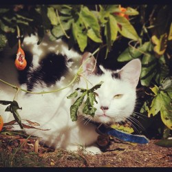 #cat #garden #colours #nature #animal #catstagram #igcats #photooftheday #instagood #jj #plants (Taken with Instagram at Sevenoaks (Kent))