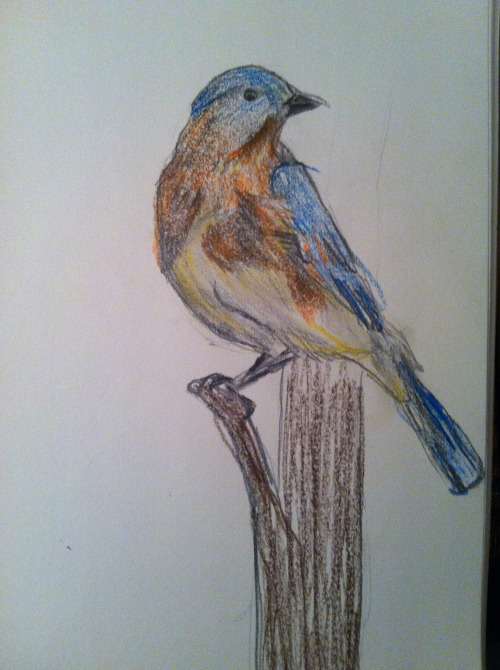Blue bird sketch