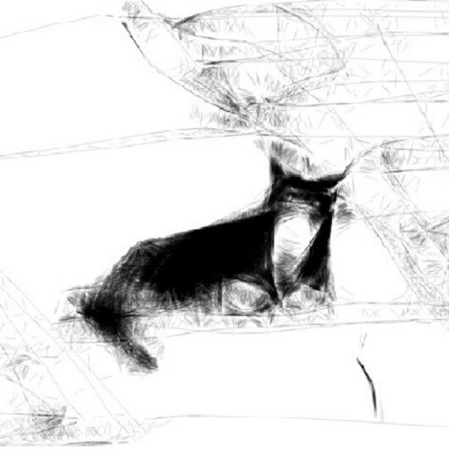Sidewalk cat. A quick sketch I did on my phone while waiting in the car (Taken with Instagram)