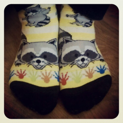 09192012 #Raccoon #Socks from SMHS #SeniorTrip to #Yosemite // Time to say #Goodbye :( Too old.. // #Things #Cute #Animals #Holes (Taken with Instagram at Broadway Residence Hall)
