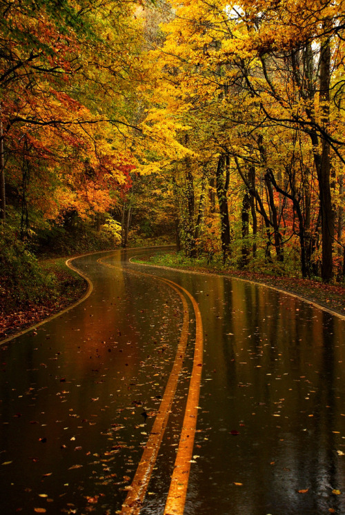 lori-rocks: Yellow Leaf Road, North Carolina, (by tilman paulin)
