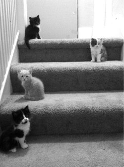 catsbeaversandducks:  Stairway to Heaven Photo via we heart it  KITTENS