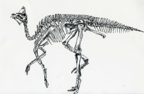 many more dino drawings to be seen at the show!