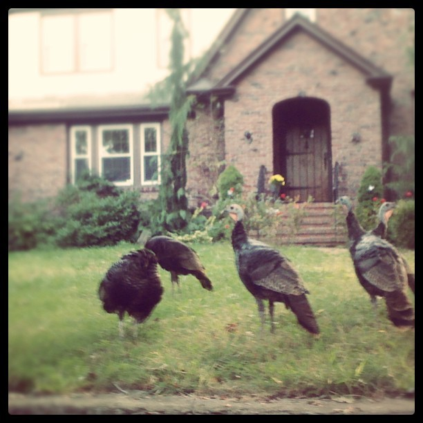 Ugh! Can't wait til thanksgiving… Come here giant birdy!!  (Taken with Instagram)