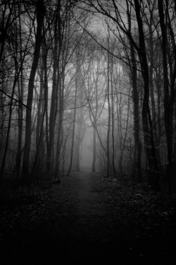 liquidnight:  MonoStep From the Dark Trees series [via Faith is Torment]