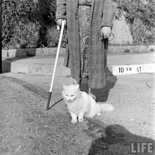 Loran Smith: Seeing Eye Cat, 1946. Source: LIFE Photo Archive, hosted by Google.