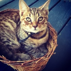 My kitten in a basket ☺ (Taken with Instagram)