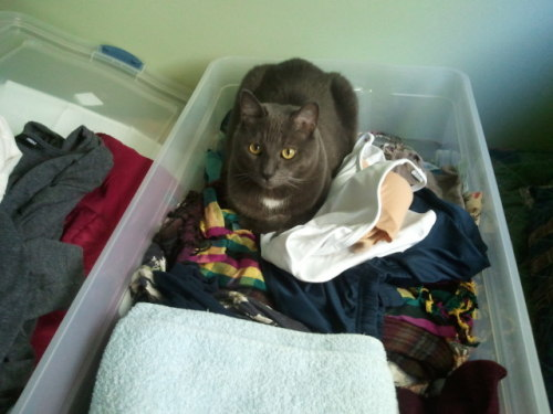 get out of there cat. you're not my laundry.