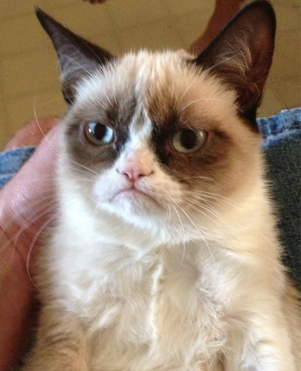superpunch2:  Grumpy cat.  Here's video:   THIS CAT