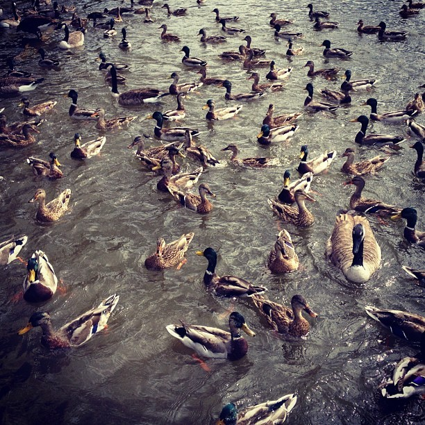 Duck pattern #duckface (Taken with Instagram)