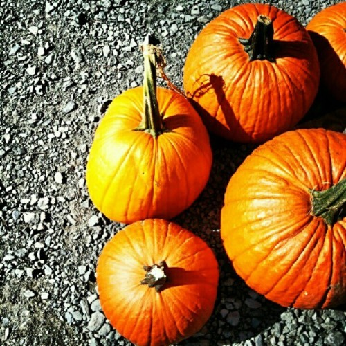 Tis the season. #autumn #fall #bethel #ny #pumpkins (Taken with Instagram)