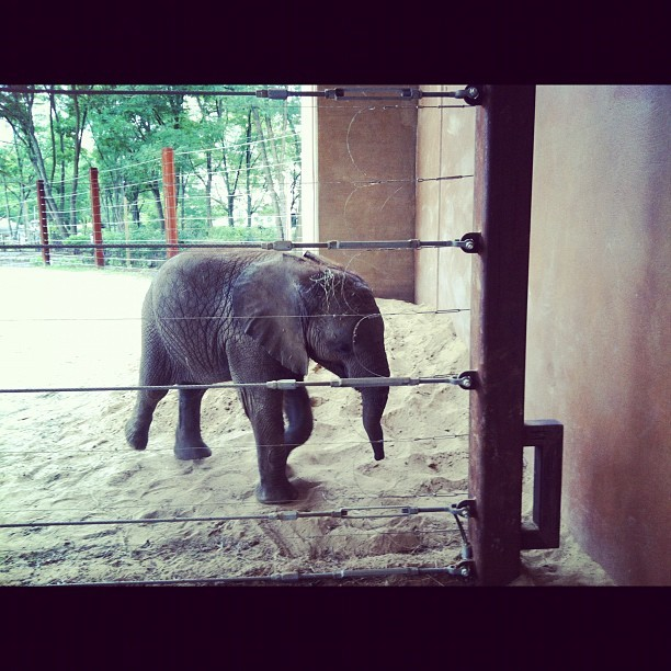 Just a little guy. @ToledoZoo (Taken with Instagram)