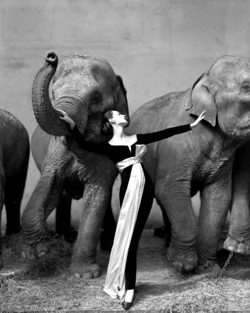 Richard Avedon's iconic photo of model Dovima posed with elephants.