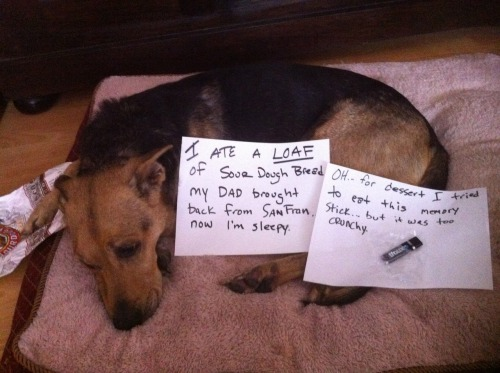 dogshaming:  San Fran sour dough, yum yum!  This looks just like MY dog. Who actually DID steal and eat a loaf of sourdough bread once. A walk down dog shaming memory lane.